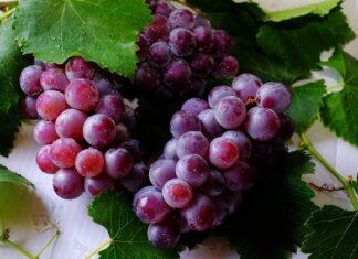 Jak przycinać winogron?